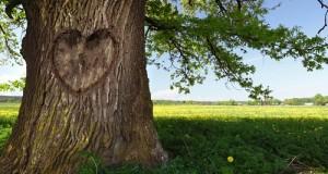 اكتب اسمك علي الشجرة