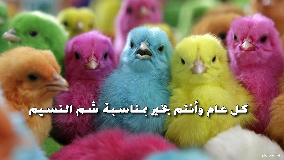 صوره شم النسيم