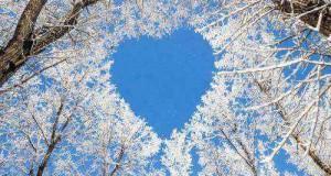 Heart_and_tree