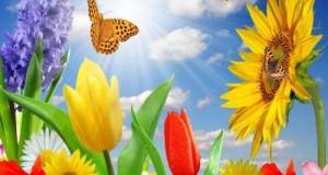 Summer_Spring