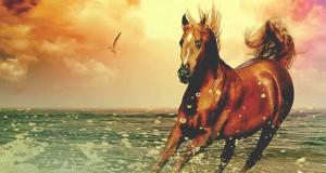 akteb-wild_horse