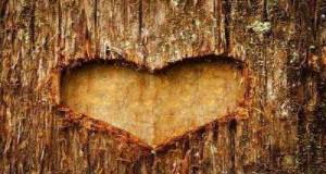 قلب على الشجر
