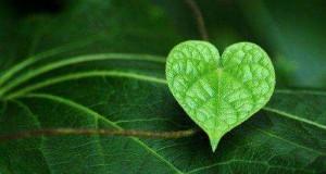 صور قلب اخضر