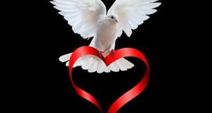 طائر الحب