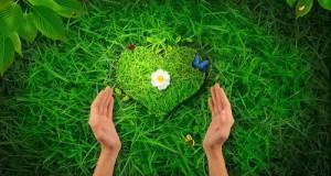 قلب اخضر