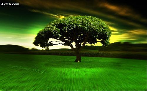 اجمل شجرة