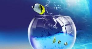اجمل حوض سمك