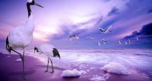 اجمل صور طيور
