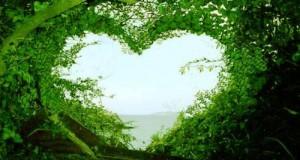 قلب من شجر