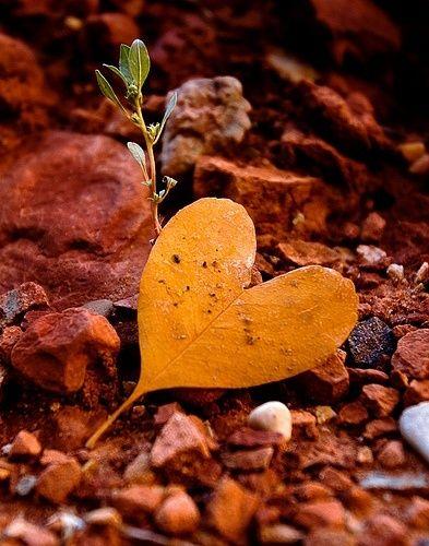 قلوب حب