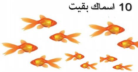 كم سمكة بقيت