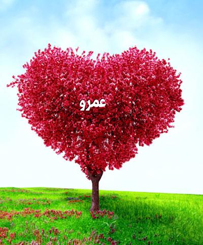 صور اسم عمرو اجمل صور لاسم عمرو صور حب ورومانسية أكتب اسمك على الصور